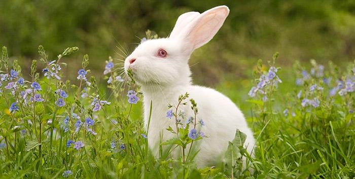 equinox-bunny